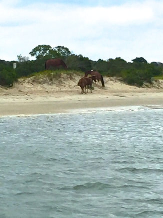 Boat tour view of the ponies near Ocean City, MD