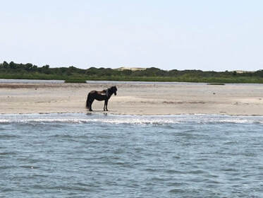 Boat tour of pony on Assateague Island, MD